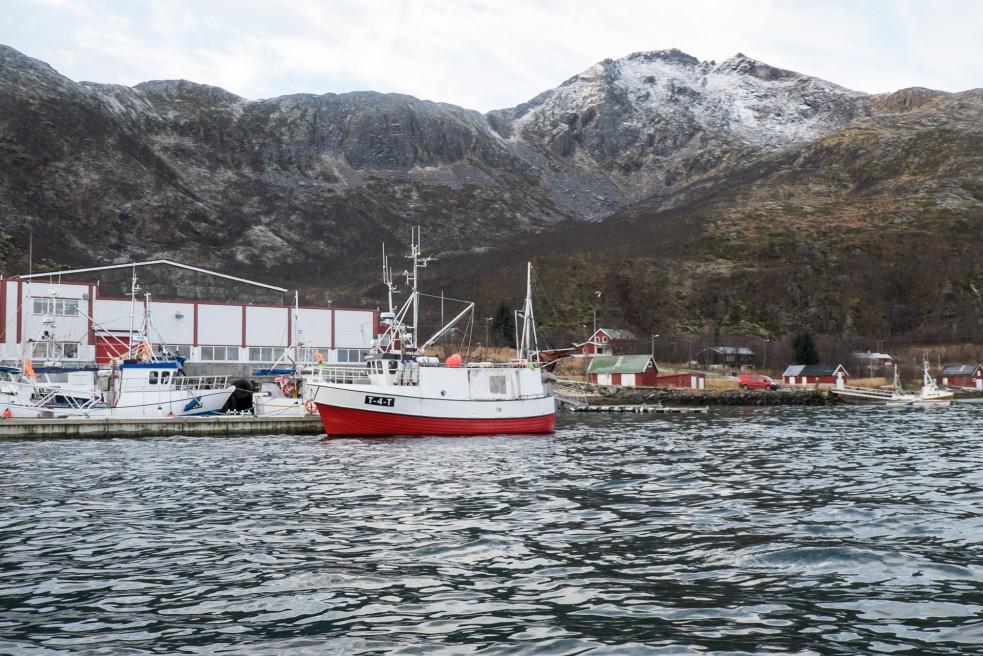 Vengsøya Seafishing