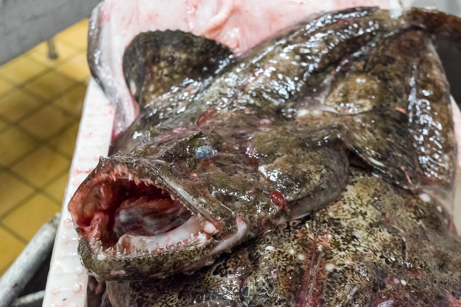 fiske-vengsoya-8751
